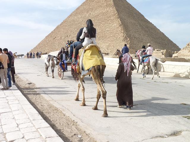 ギザピラミッド ラクダ