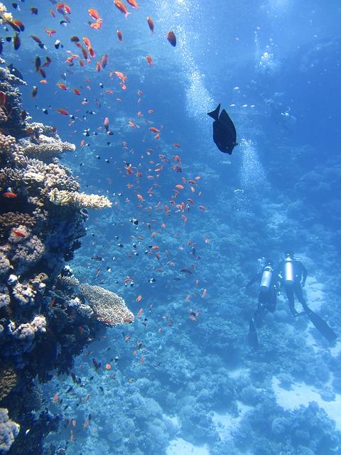 紅海でダイビング